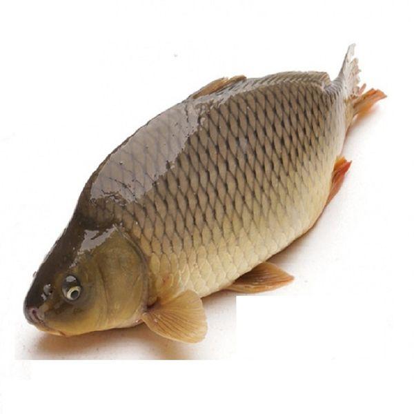 Cá chép giòn giá bao nhiêu tiền 1kg