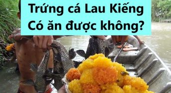 Trứng cá Lau Kiếng có ăn được không? Có nên ăn không?